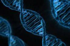 Открытие: В ДНК людей еще меньше человеческого, чем казалось раньше