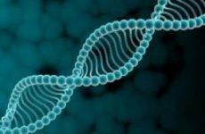 Исследователи выделили 3230 ключевых генов у человека