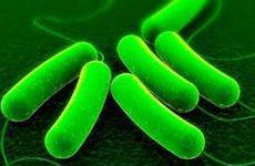Учёные создали искусственный геном кишечной палочки
