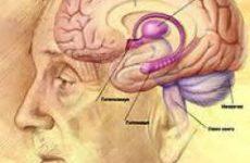 Ученые: мозг человека заранее знает, каков будет его выбор