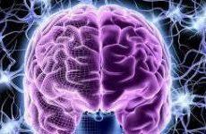 Неврологи опробовали уникальный способ омоложения мозга