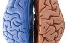 Эксперты назвали главные различия между двумя полушариями мозга