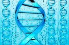 В геноме коронавируса нашли первую крупную мутацию