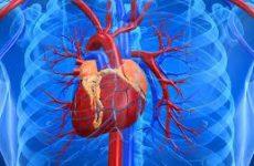 Эксперты назвали простой способ проверки состояния сердца и сосудов