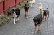Бродячие собаки могли передать коронавирус людям