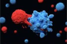 Т-клетки оказались разнообразнее, чем предполагалось ранее