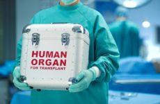 Органы от пожилых доноров можно омолаживать