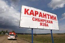 На юге Украины мужчина заболел сибирской язвой