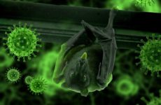 Средний возраст умирающих от коронавируса — 82 года
