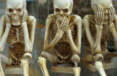 Ученые получили новые данные для создания костных имплантатов