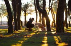Прогулки с собаками грозят заражением COVID-19
