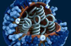 Скручивание и сжатие белков придает лекарственную устойчивость раковым клеткам