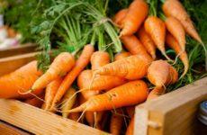 Потерю мышц можно сократить с помощью лекарства на основе моркови