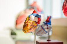 Электрические кровеносные сосуды вылечат болезни сердца