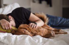 Сонливость назвали домашним симптомом коронавируса