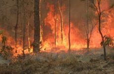 Лесные пожары, автомобили и электростанции повышают риск болезни Альцгеймера