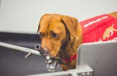 Собаки помогут создать роботов для поиска рака простаты