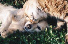 Пандемия COVID-19 распространится на домашних животных