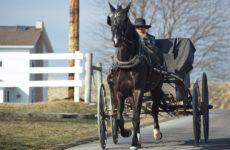 У поселения амишей в США выявили коллективный иммунитет