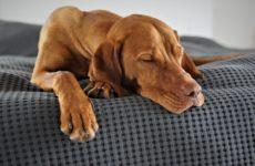 Дневной сон: как спать так, чтобы набираться энергии