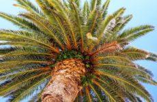Плантации масличных пальм угрожают здоровью людей