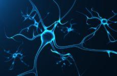 Старые нейроны, контролирующие привычки, также могут помочь мозгу научиться новым трюкам