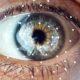 За кулисами мозговой контур обеспечивает надежное зрение