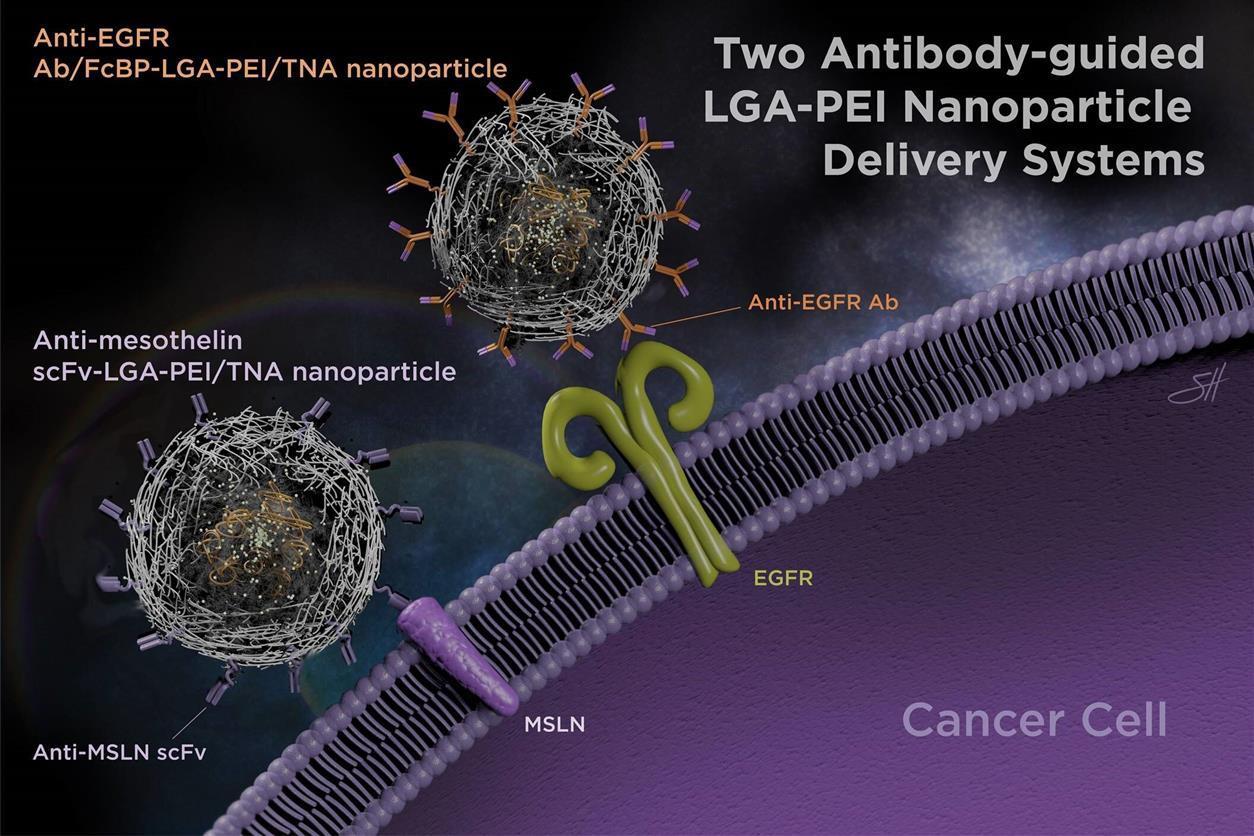 Антитела улучшают доставку наночастиц терапевтических нуклеиновых кислот, Здоровье и современная медицина