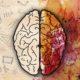 Новые исследования о развитии клеточной географии мозга