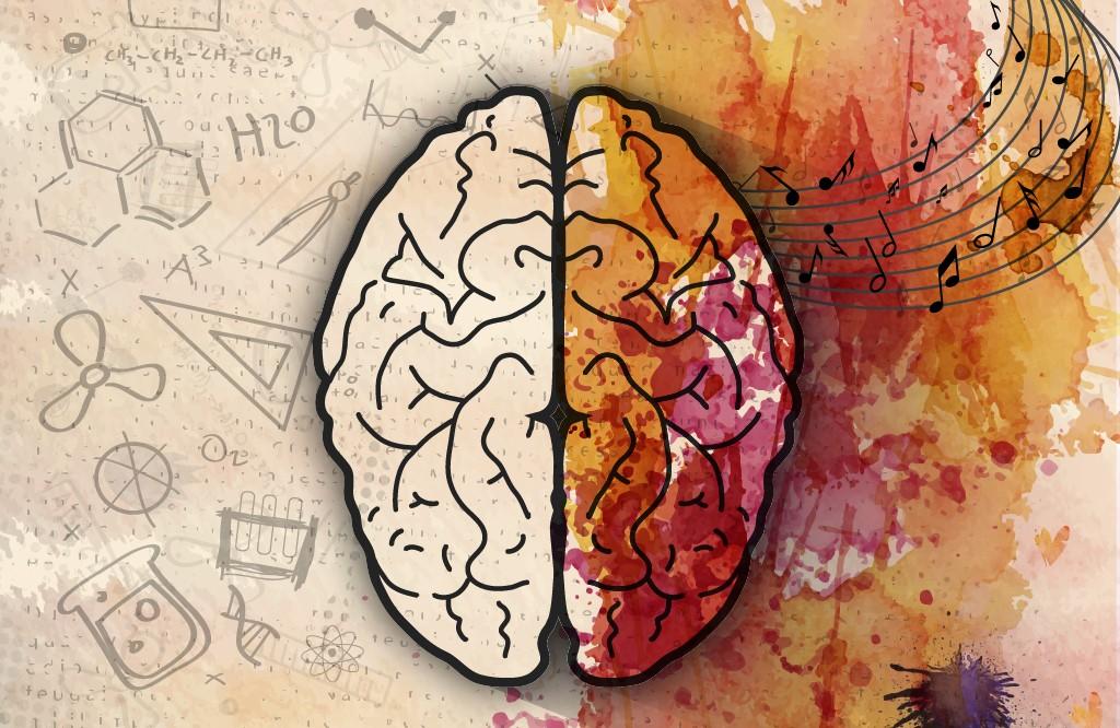 Новые исследования о развитии клеточной географии мозга, Здоровье и современная медицина